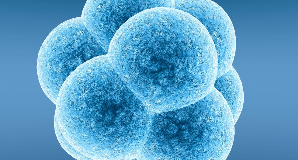 Genetically modified embryos 'essential' for science, experts say