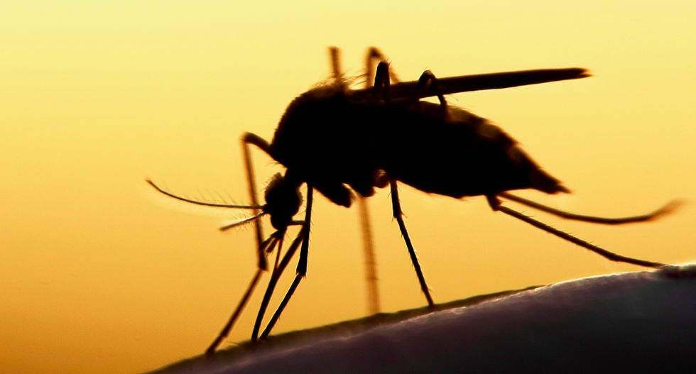 With genetic tweak, malaria-carrying mosquito population made extinct