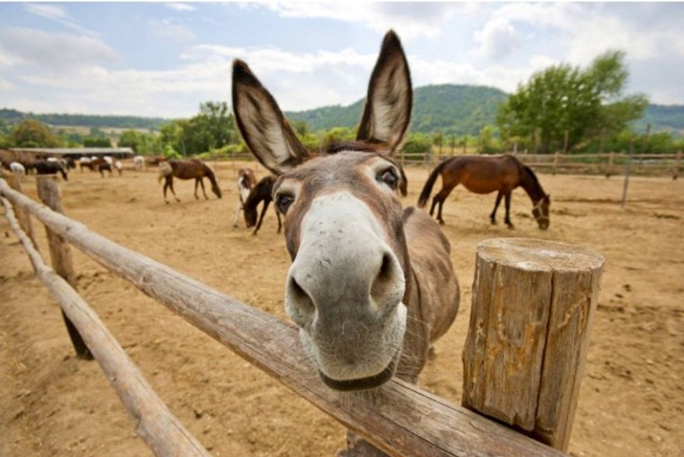 China 'medicine' demand threatens world donkey population: report
