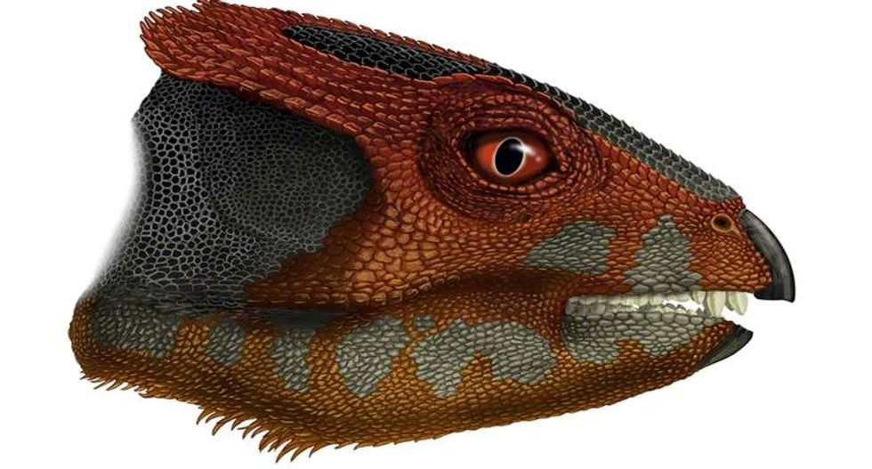 Newly-discovered fossil reveals 3-foot dinosaur was Triceratops' tiny ancestor