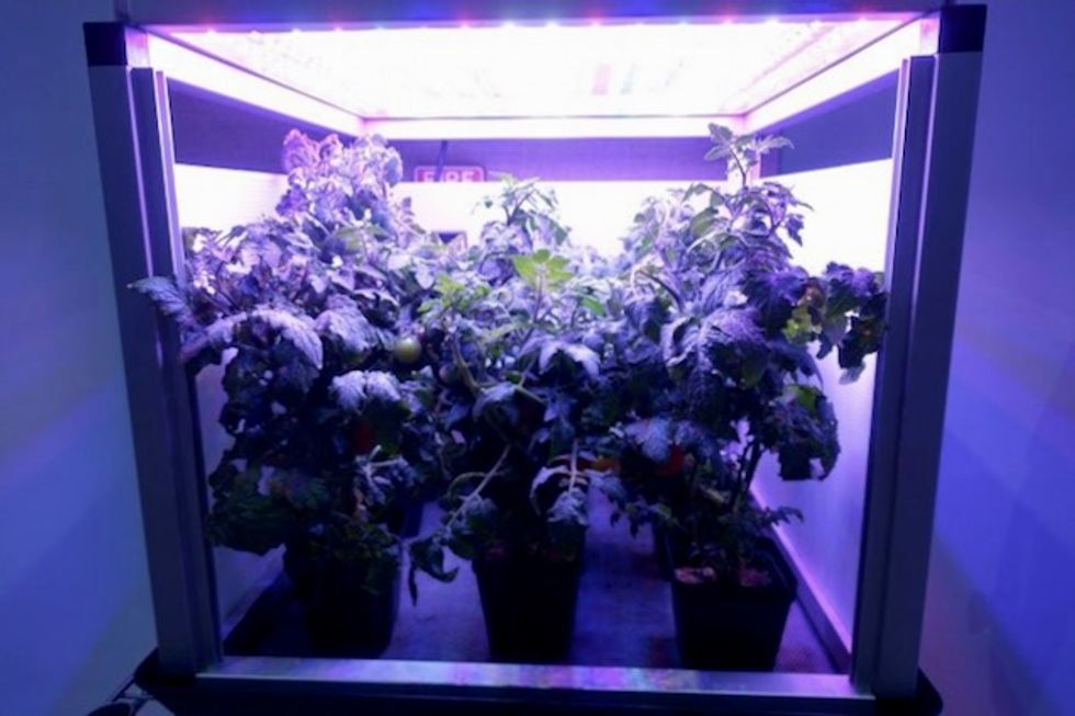 The challenge of space gardening: One giant 'leaf' for mankind