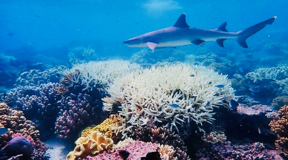 Scientists try 'cloud brightening' to protect Great Barrier Reef