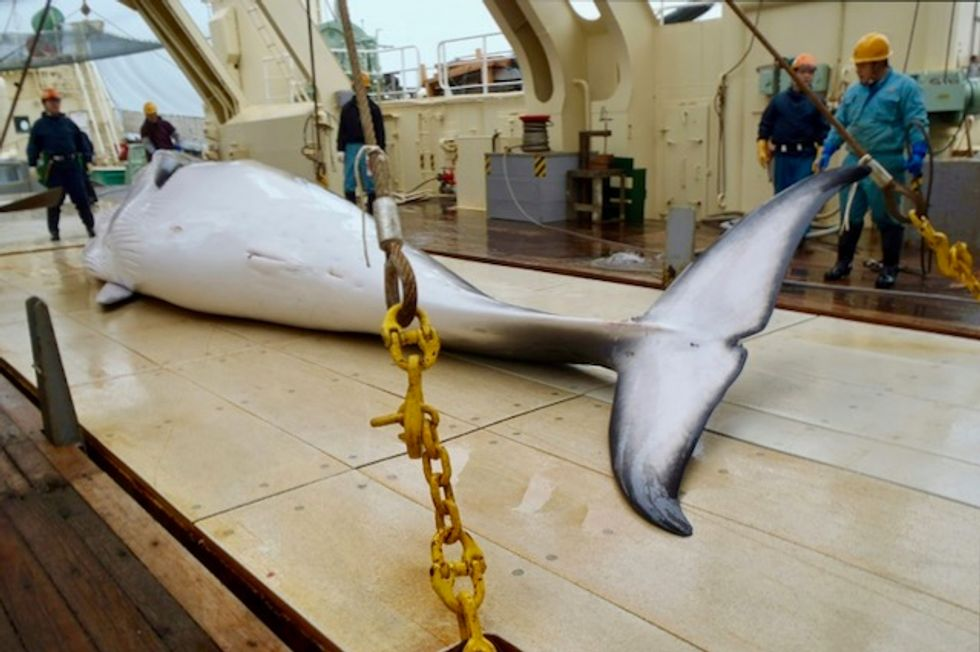 After decades, Japan courts controversy resuming commercial whaling