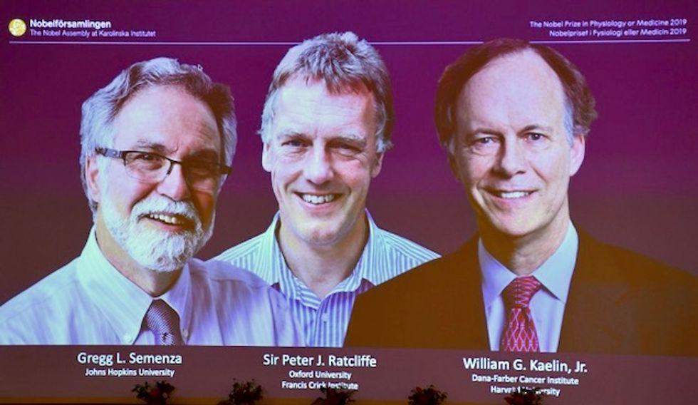 Trio win medicine Nobel for work on how cells adapt to oxygen
