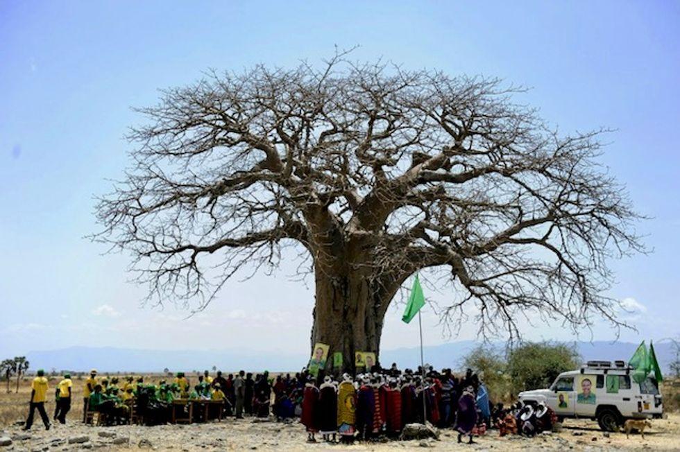 'Shocking' die-off of Africa's oldest baobabs: study