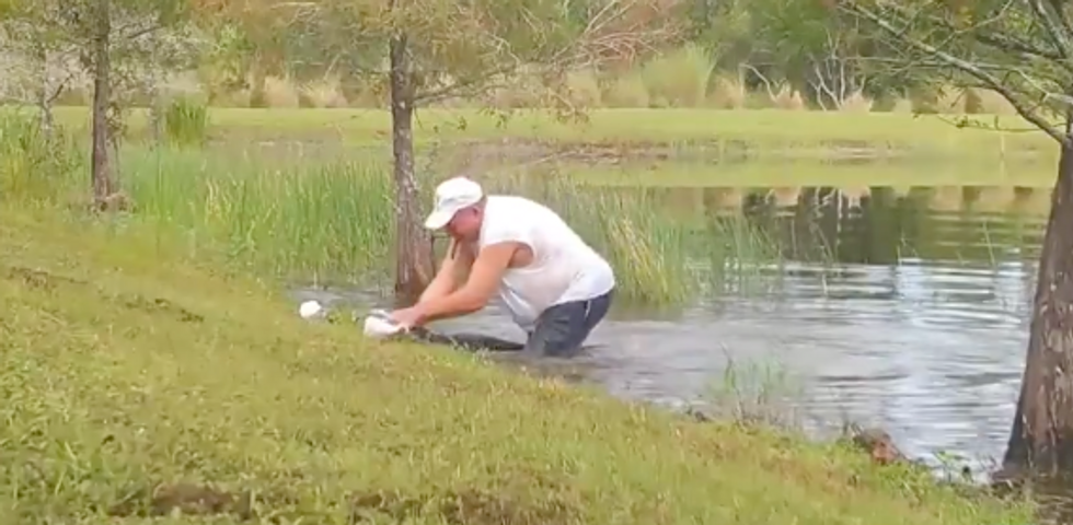 'Hero' retiree turns 'Florida man' trope on its head with incredible rescue of puppy from gator's jaw