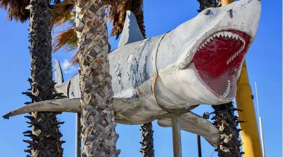 You're gonna need a bigger museum: 'Jaws' shark installed