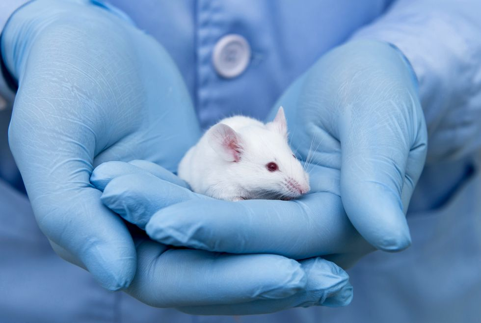 Genetic engineering transformed stem cells into working mini-livers that extended the life of mice with liver disease
