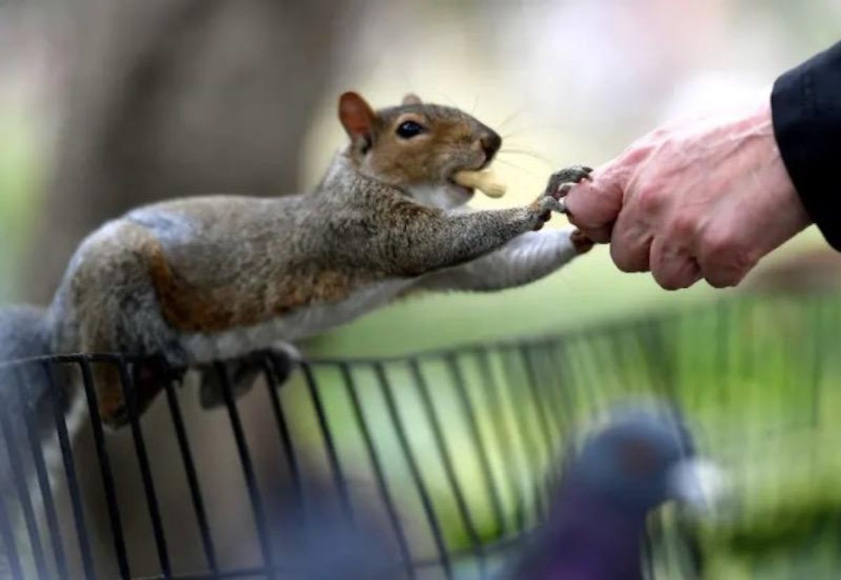 Nuts! Rogue squirrels attacking New Yorkers in Queens