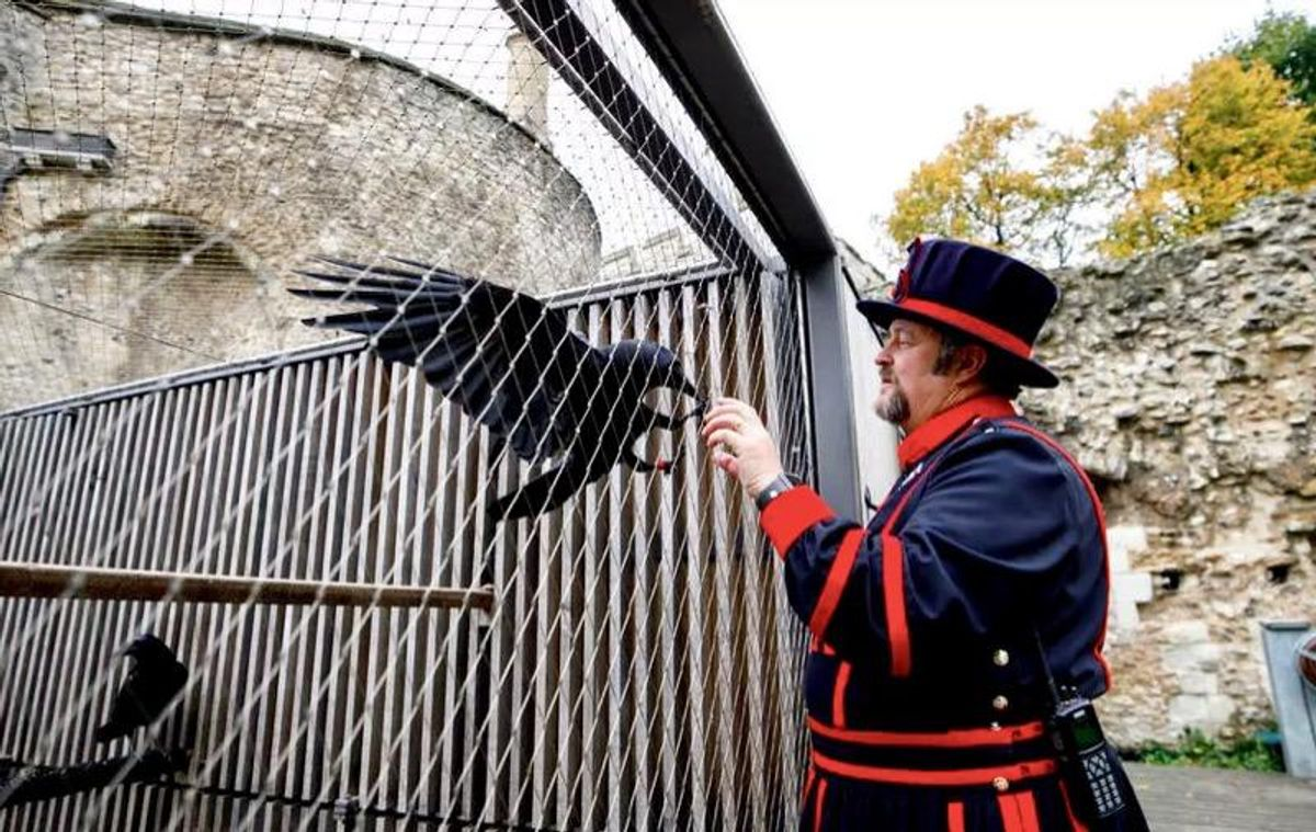 Bad omen for UK as Tower of London raven missing, feared dead