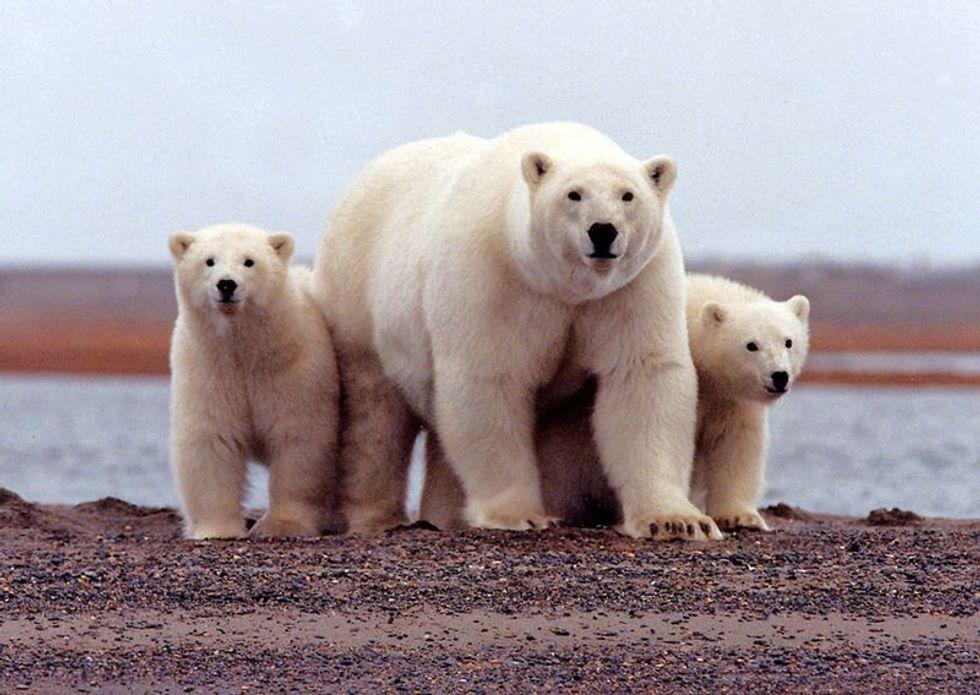 Arctic drilling plan in Alaska hits roadblock