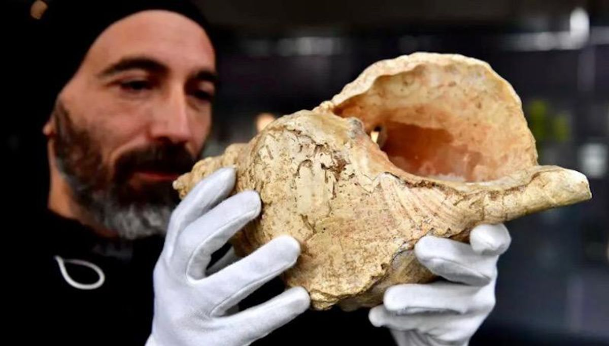 Earliest shell horn played for first time in 17,000 years