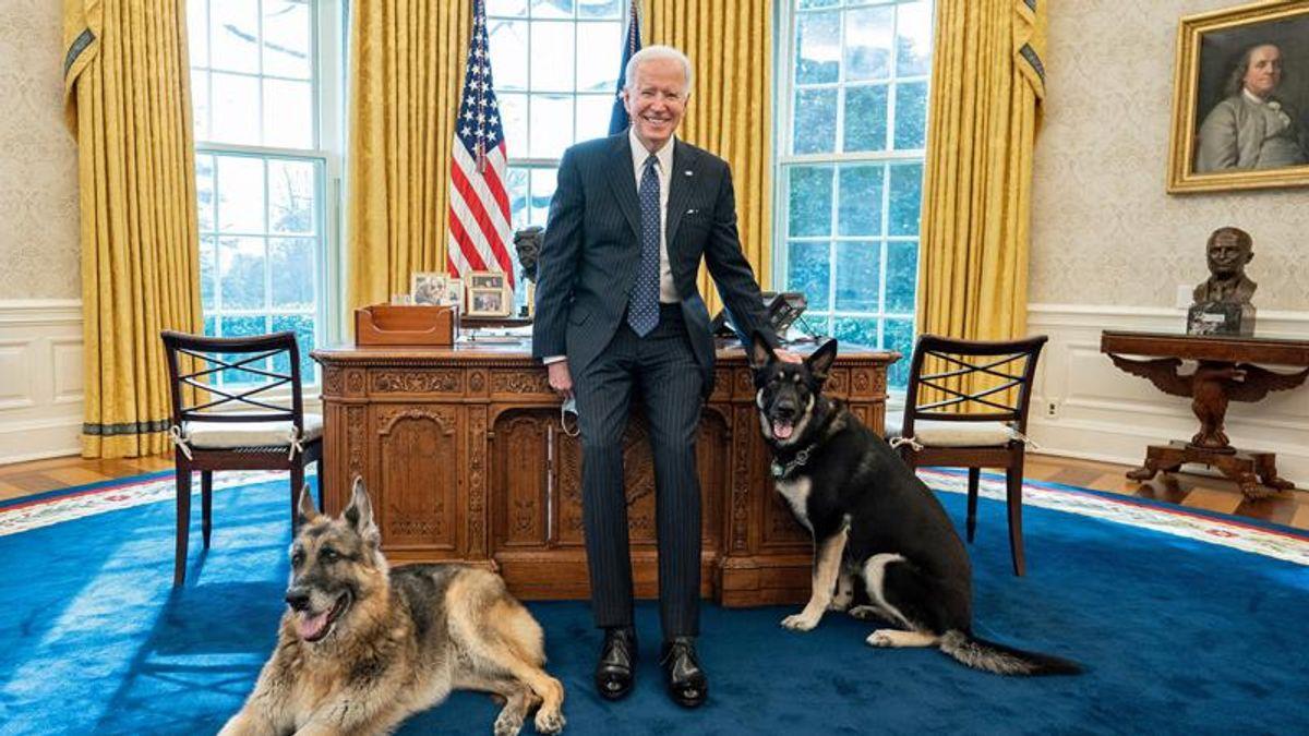 Major, bad dog: Biden's German Shepherds sent back to Delaware