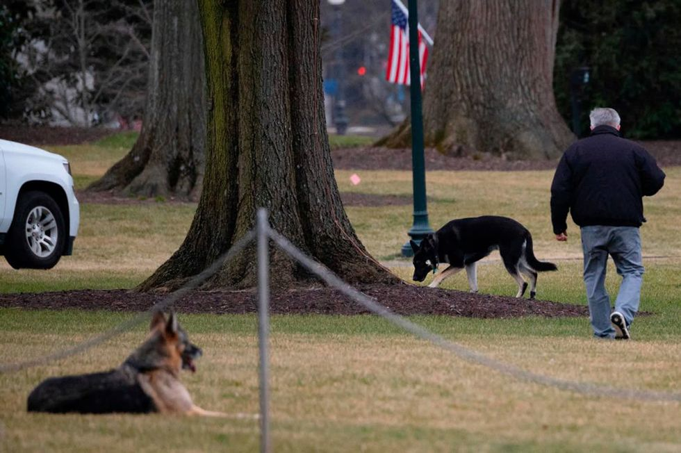 Biden's cat will 'break the internet' when it arrives at White House,  spokeswoman says