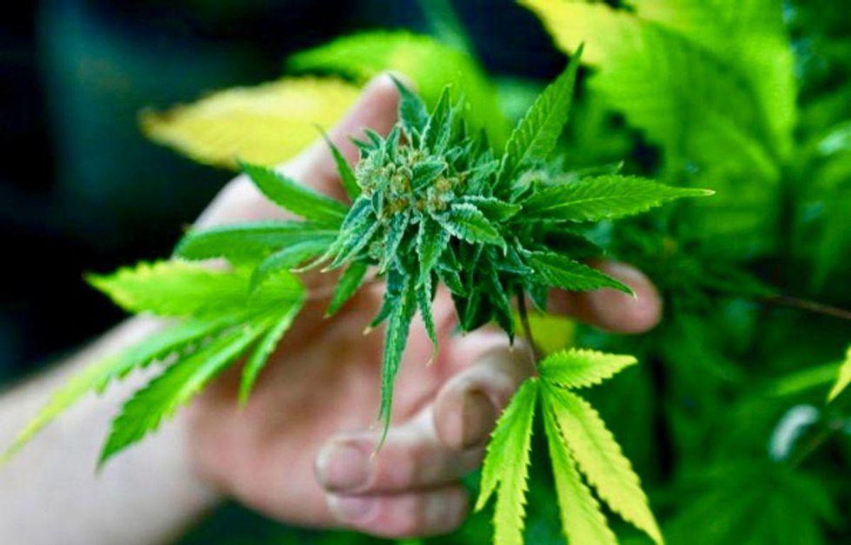 'Major step forward' as New Mexico legalizes recreational marijuana