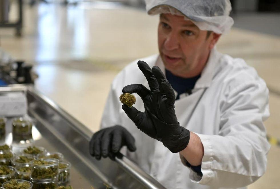 New York looks to become America's next marijuana hub