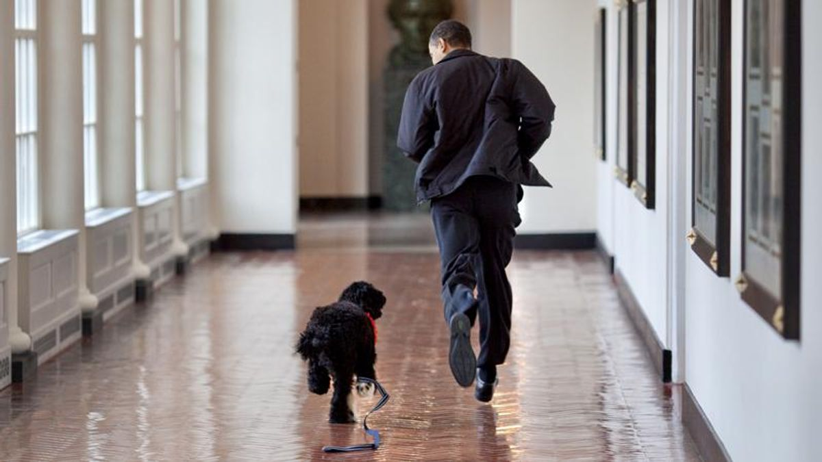 'Bo was a very good boy': America mourns passing of Obama's dog
