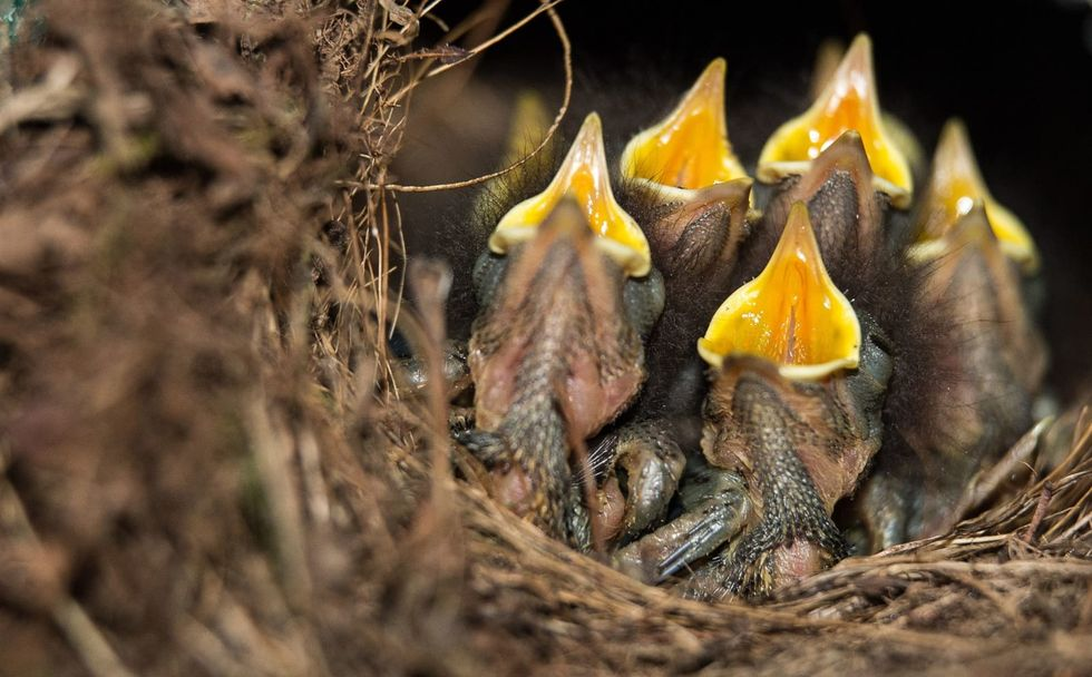 Traffic noise making birds worse at singing, new research finds