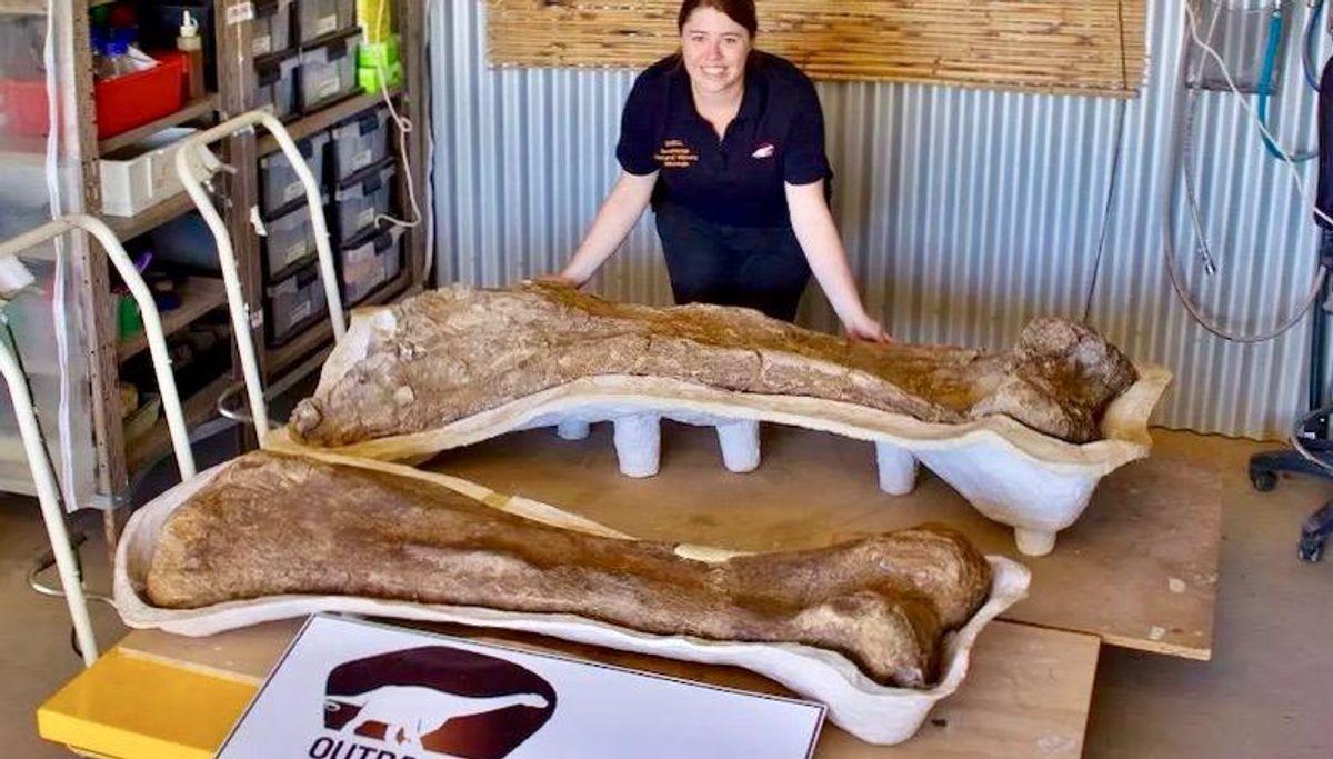 Australia's largest dinosaur identified as new species