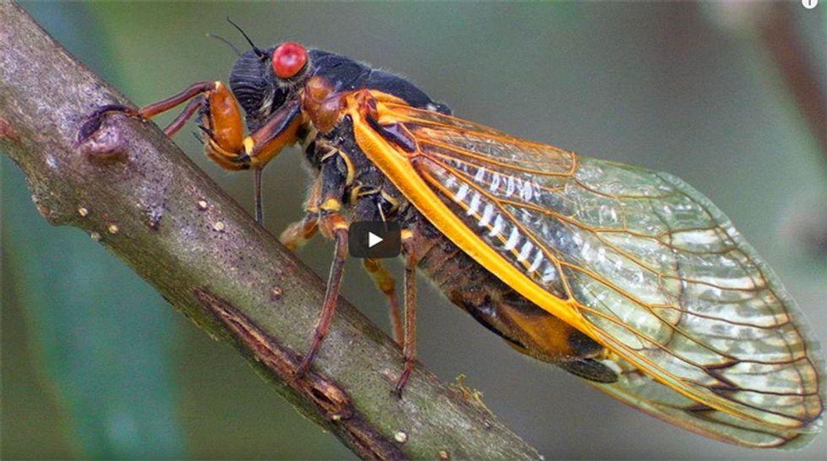 Biden's Europe-bound press plane delayed by cicadas