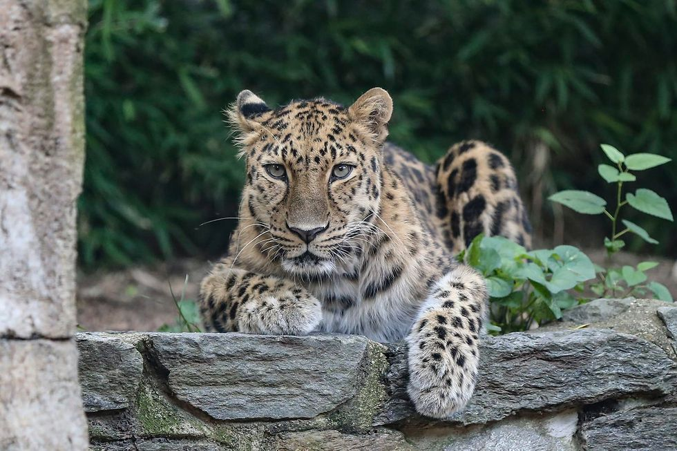 Philadelphia Zoo plans to vaccinate at-risk animals against COVID-19