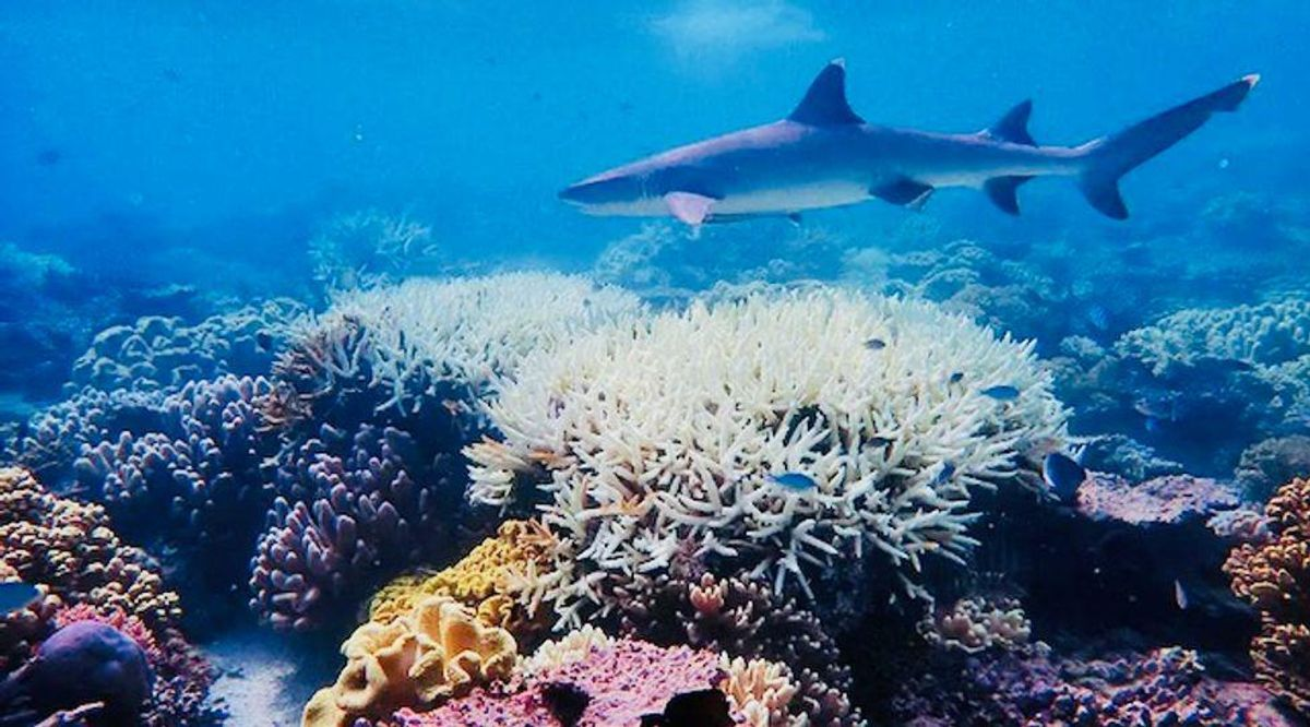 Great Barrier Reef's World Heritage status at risk