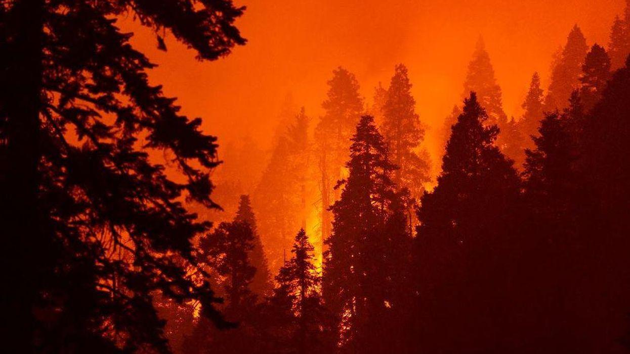 Terrible proof: California fire documentary explores human failings behind blazes
