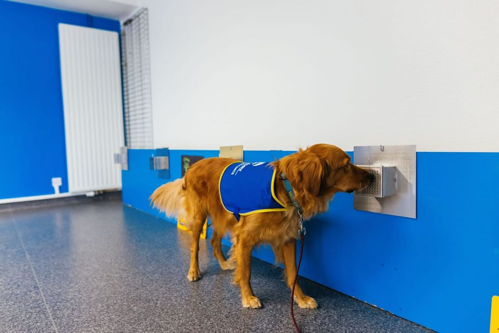 In France, dogs are sniffing out whether people have Covid-19