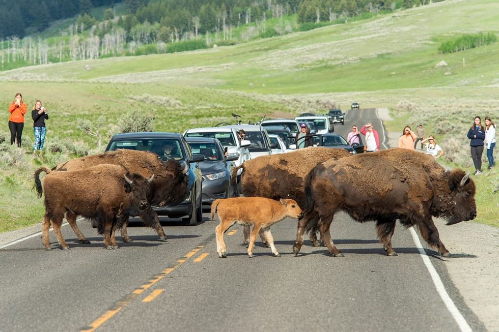 How to behave in National Parks -- according to the people who work there