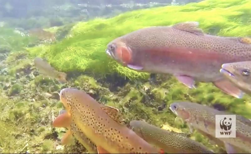 'We must heed the warning': 1 in 3 freshwater fishes—vital to food and jobs for millions—face extinction