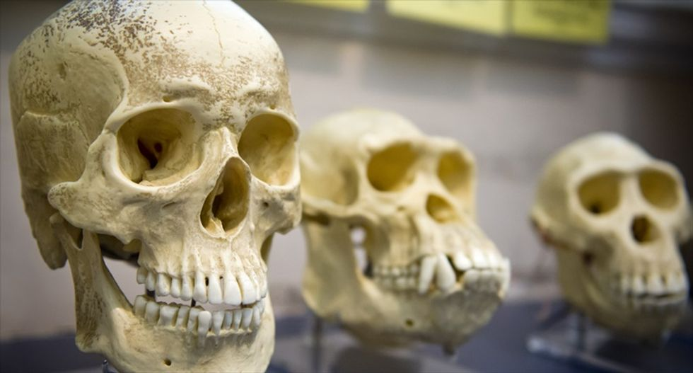 9,000-year-old 'Kennewick Man' at center of lengthy legal battle was Native American, study suggests