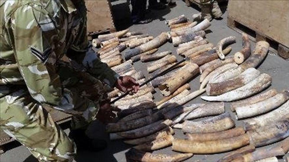 Wildlife activists: Nairobi mall attackers make their money poaching
