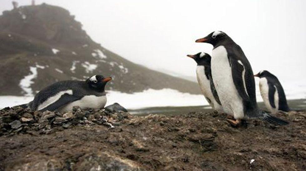 Nations debate whether to create two giant Antarctic ocean sanctuaries