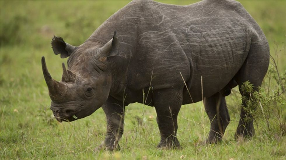 Wildlife population down by half in 20 years, as human populations double