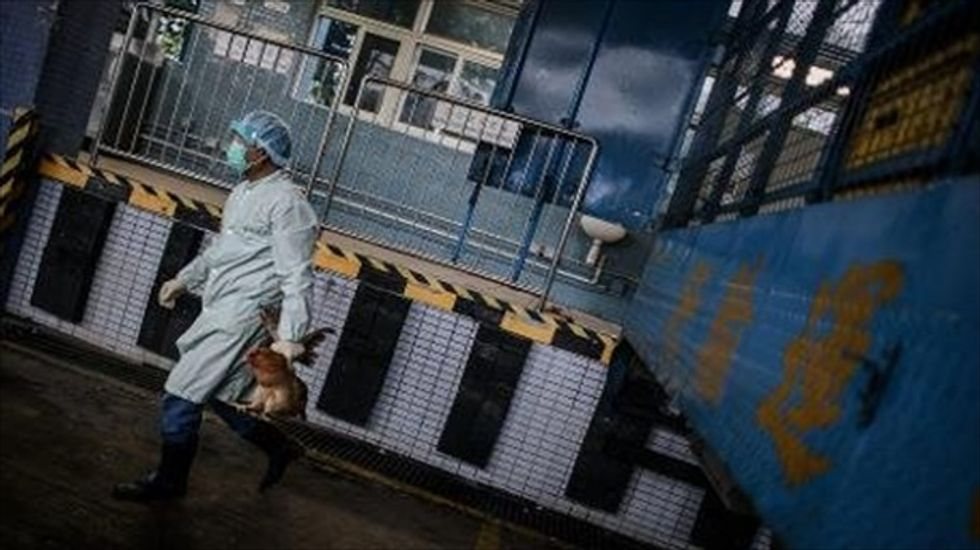 Hong Kong steps up border health checks over bird flu