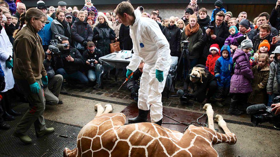 Copenhagen Zoo staff get death threats after giraffe killing
