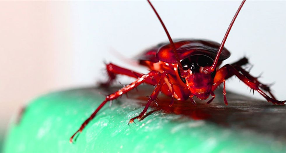 Flying cockroaches may invade New York City this weekend thanks to massive heatwave: scientists