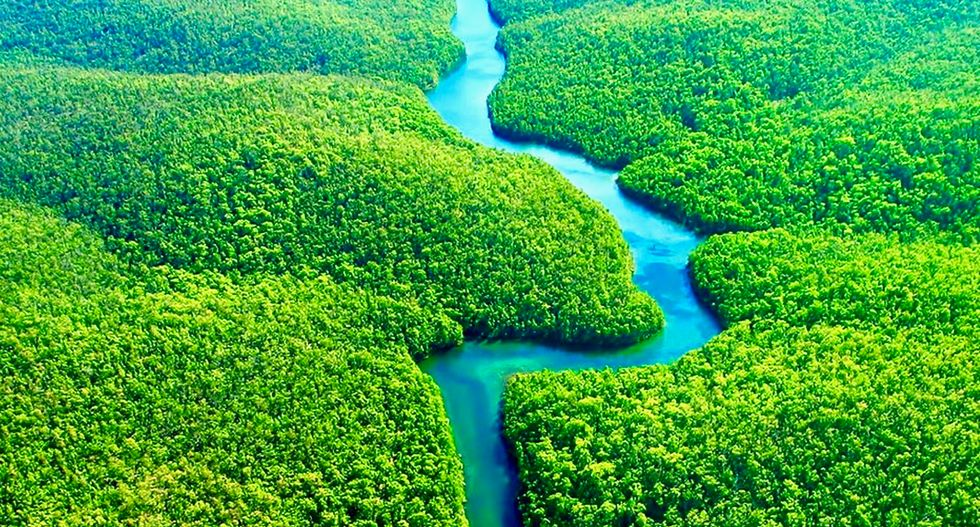 Fourteen thousand plant species have been discovered in the Amazon rainforest
