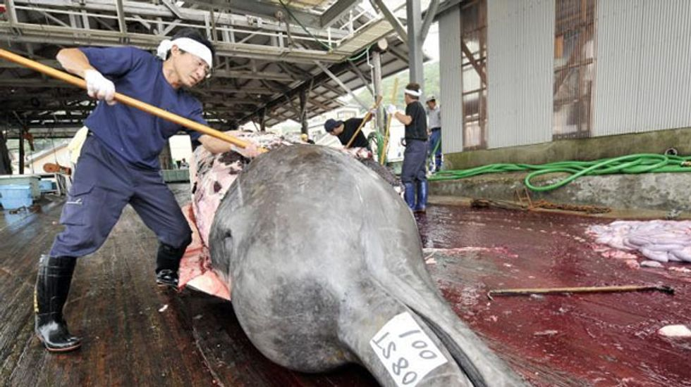 Top United Nations court orders Japan to end Antarctic whale hunt