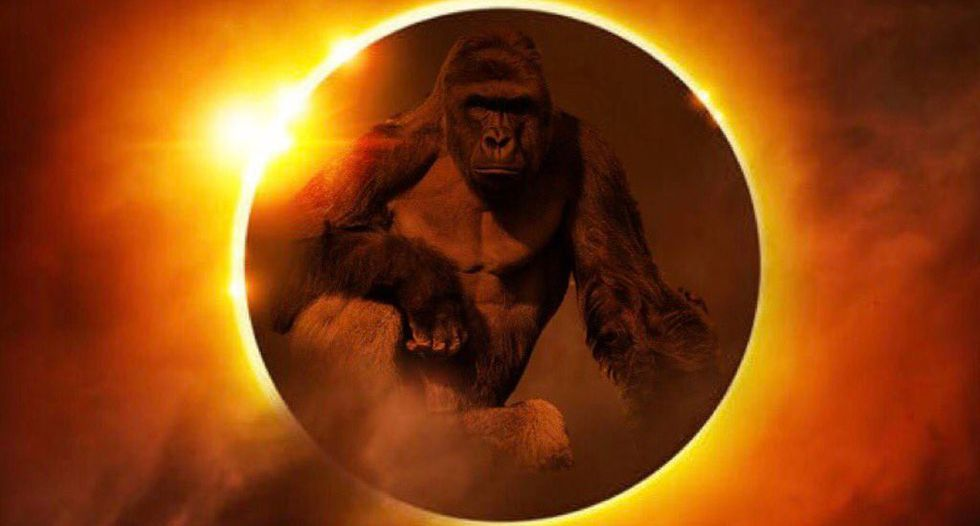 'Are you drunk?': Internet loses it after GOP rep posts 'bizarre and racist' Harambe eclipse meme