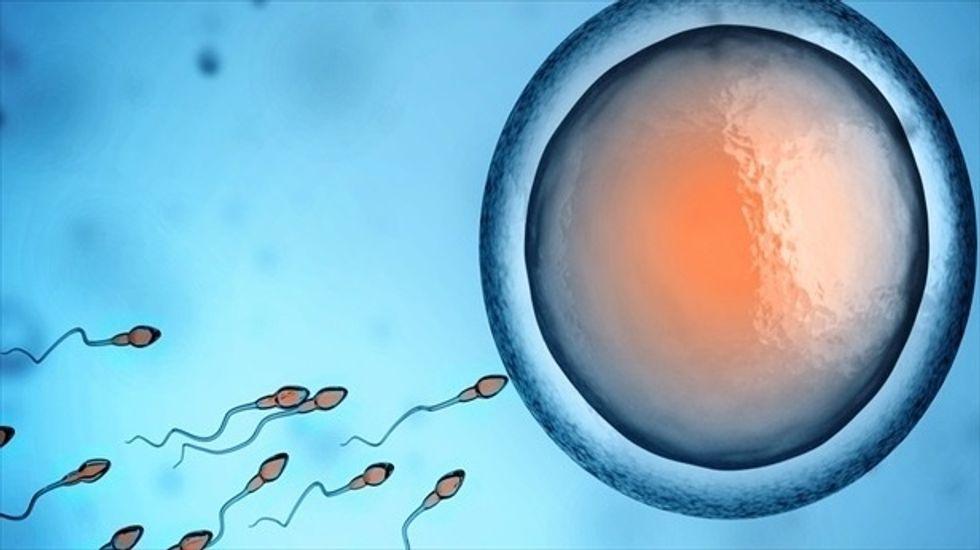 Scientists create first-ever primordial precursors to sperm, eggs