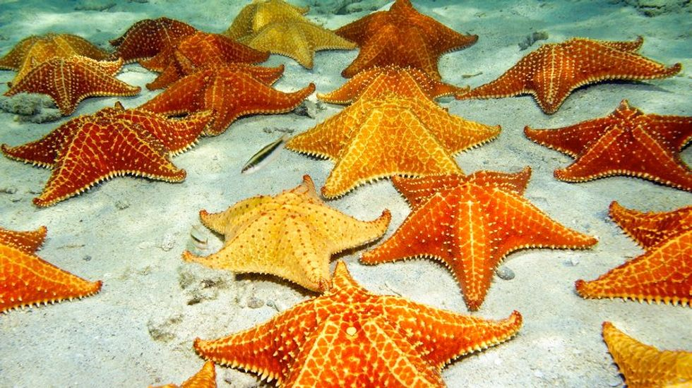 Mystery virus that turned millions of starfish into goo is finally identified