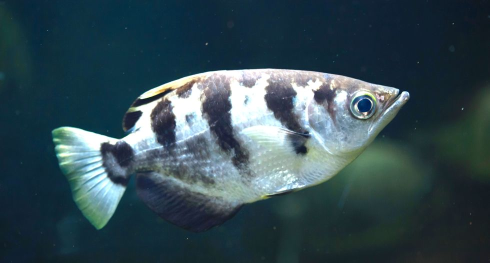 Fish can recognize human faces, study finds