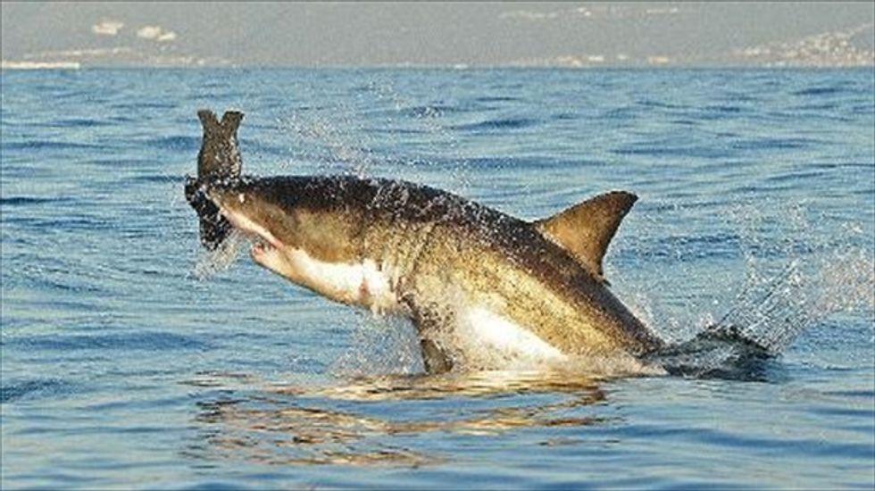 Two teens injured in shark attacks at North Carolina island resort