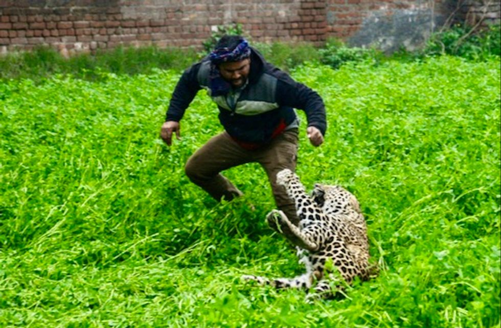 Marauding leopard causes panic in Indian city