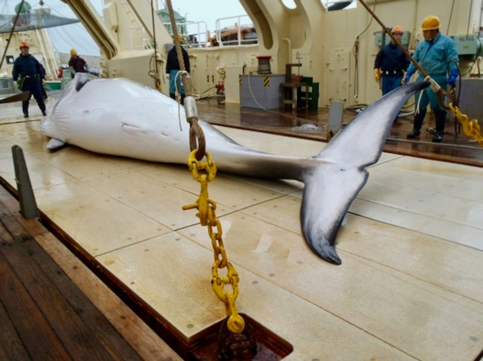 Japan whalers return from Antarctic hunt after killing 333 whales
