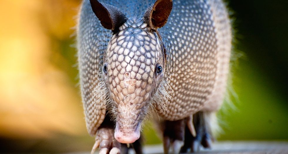 Texas man hospitalized after his bullet ricochets off of armadillo