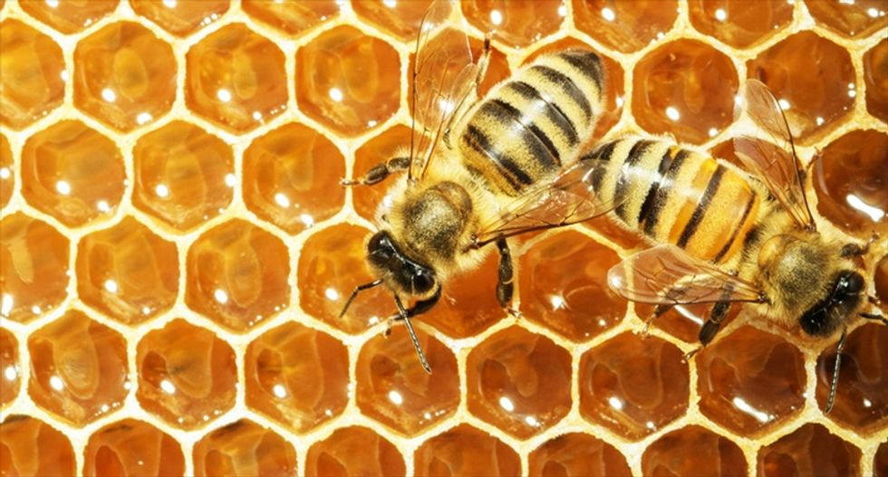 Here is why honey bee brood could be the future of food