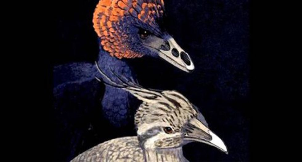 Scientists created chicken embryos with Velociraptor-like snouts -- here's why