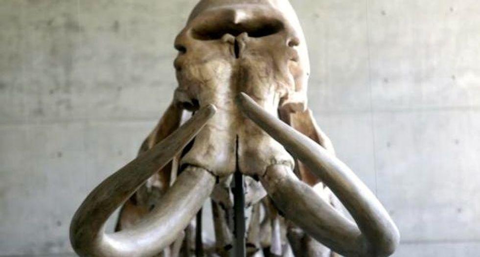 Ancient mammoth remains found in Switzerland